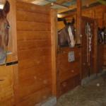 paard4