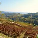 Spigno Monferrato - Vigneti