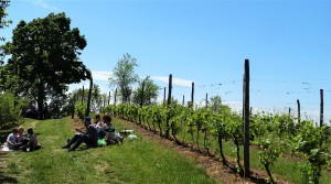 Picnic in de wijngaarden