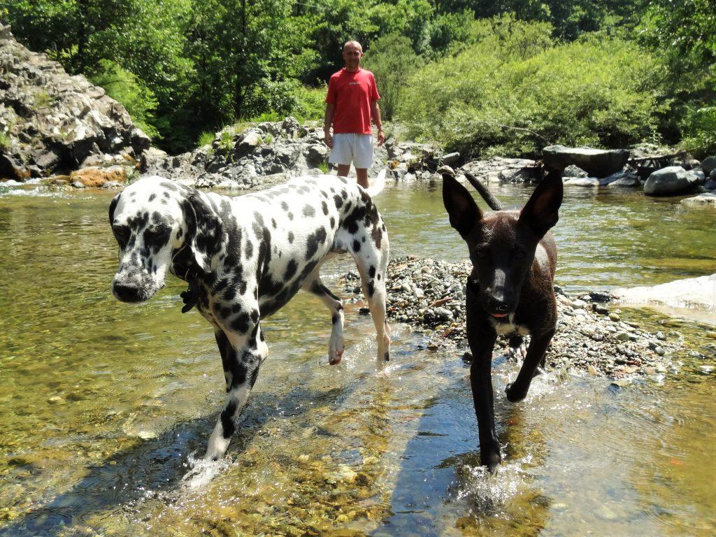 met de honden naar de rivier