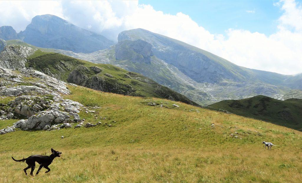 wandelen met hondjes in de bergen