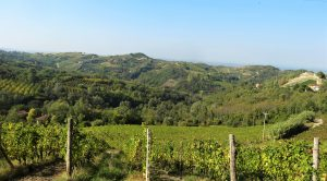 unesco werelderfgoed wijnheuvels piemonte