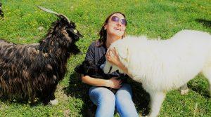 Cashmere geitjes knuffelen