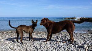 Hondvriendelijk Italië