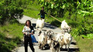 De jonge boeren die de Bormida vallei nieuw leven inblazen