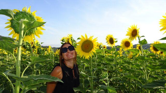 Draaiende zonnebloemen?