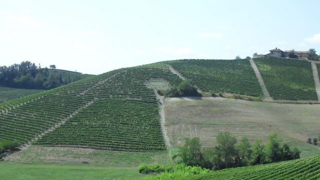 De duurste wijngaarden