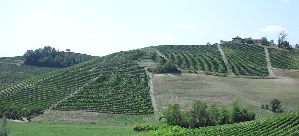 wijngaarden barolo piemonte