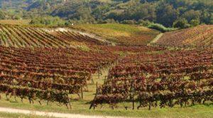 """Piemonte bij de """"7 beste wijnreiservaringen ter wereld in 2020"""""""