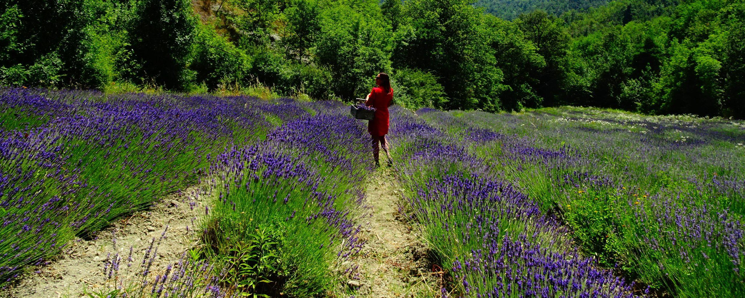 piemonte lavender region