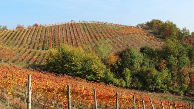 Piemonte, wine country