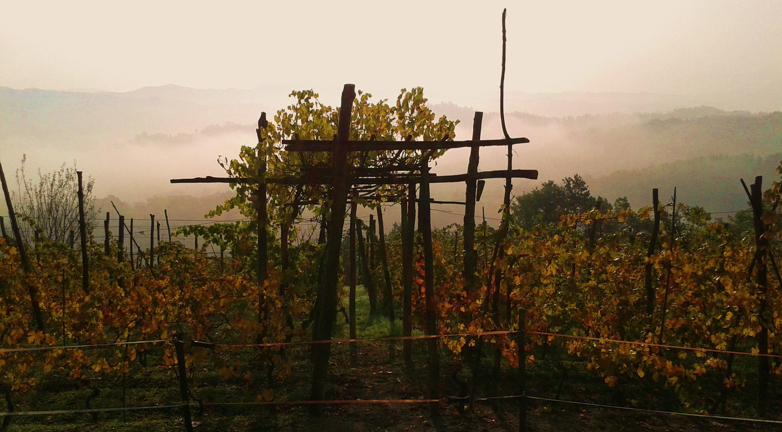 de-wijngaard-van-de-buren