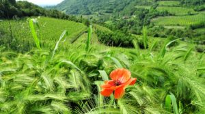 Secret places in the no man's land between Piemonte and Liguria
