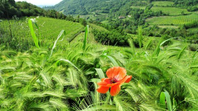 Geheime plekjes in het niemandsland tussen Piemonte en Liguria