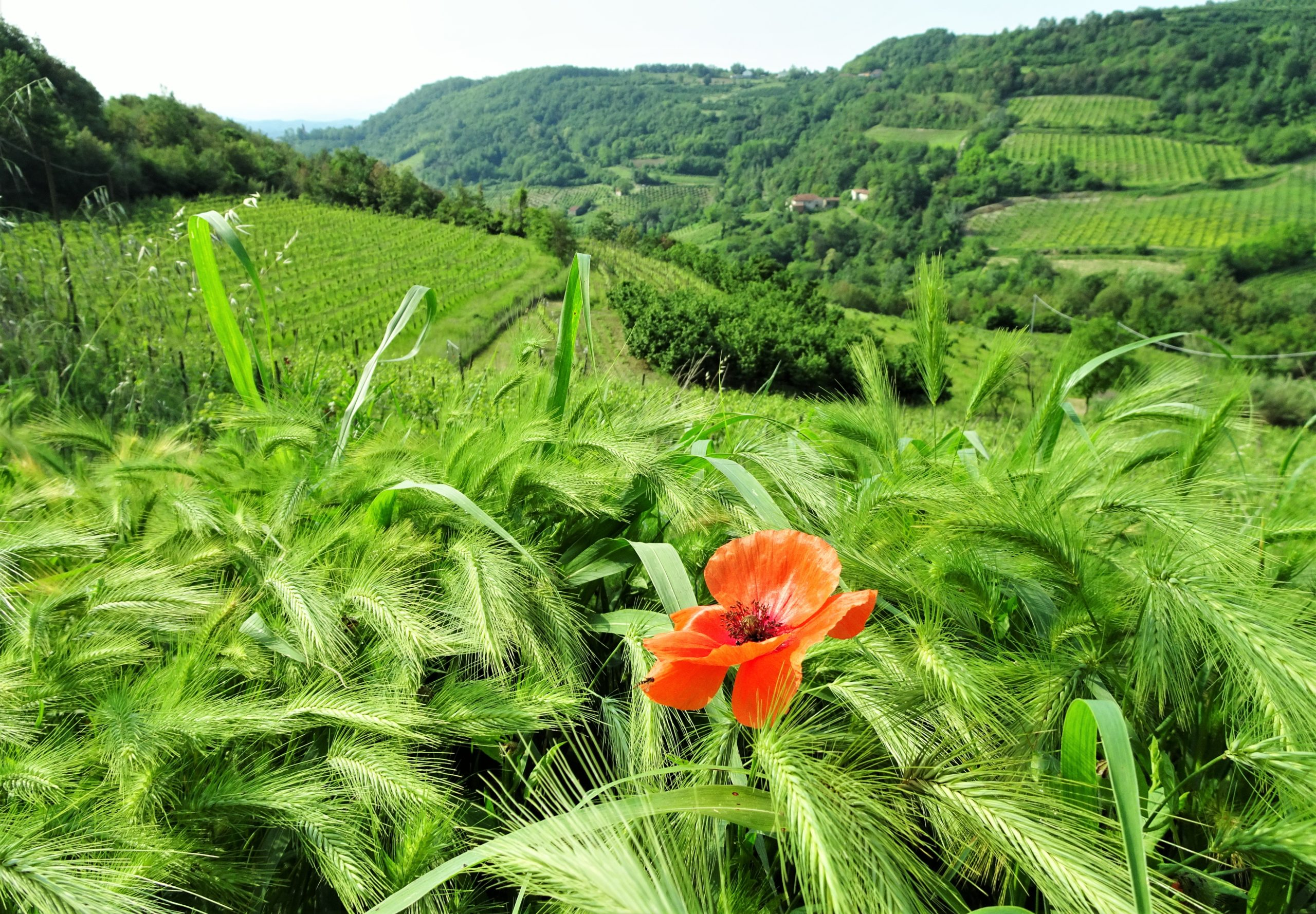 wijngaarden spigno monferrato