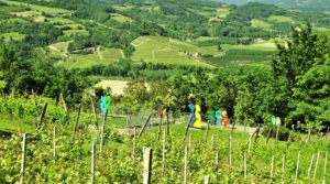 A hill covered with art and vineyards (Bubbio, South Piemonte)