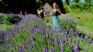 Terug in de tijd – Deel 48: Wilde lavendelvelden